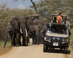escorted wildlife safaris