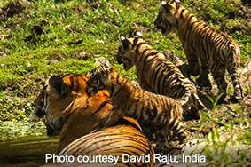 wildlife safari guides